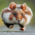 Hamster running now that the First Choice website is live